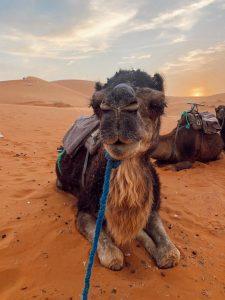 excursão Fez deserto